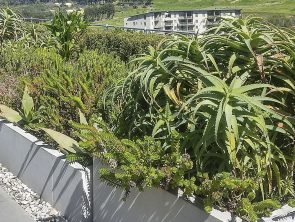 Glacier Roof Garden